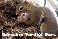 Photo of SİNCABIN VERDİĞİ DERS